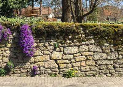 Blumen in der Mauer